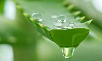 7 Reasons To Use Aloe Vera